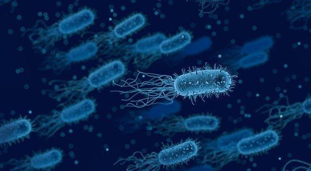 bakteriler - Bakteri Nedir? Bakterilerin Özellikleri ve Çeşitleri